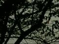 公園にまた4機のヘリストーカー