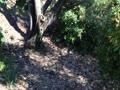 公園の中にある空き地