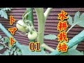 【Slow Life】水耕栽培 05 ペール缶でトマト栽培 01